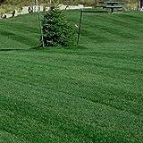 Outsidepride Midnight Kentucky Bluegrass Lawn Grass