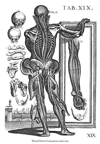 ML41 Vintage Medical Anatomical Illustration Human Full Body Anatomy Sketch Nerve Limb Muscles Da Cortona Poster Print - A2+ (610 x 432mm) 24