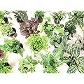 Mini Terrarium Plants 6 Plants 2 Pots Fairy Garden Plants Assorted Varieties