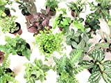 Mini Terrarium Plants (6 Plants) (2'' Pots) Fairy Garden Plants Assorted Varieties