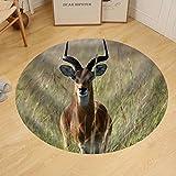 Gzhihine Custom round floor mat Impala Antelope at Murchison Falls National Park Safari Reserve in Uganda - the Pearl of Africa