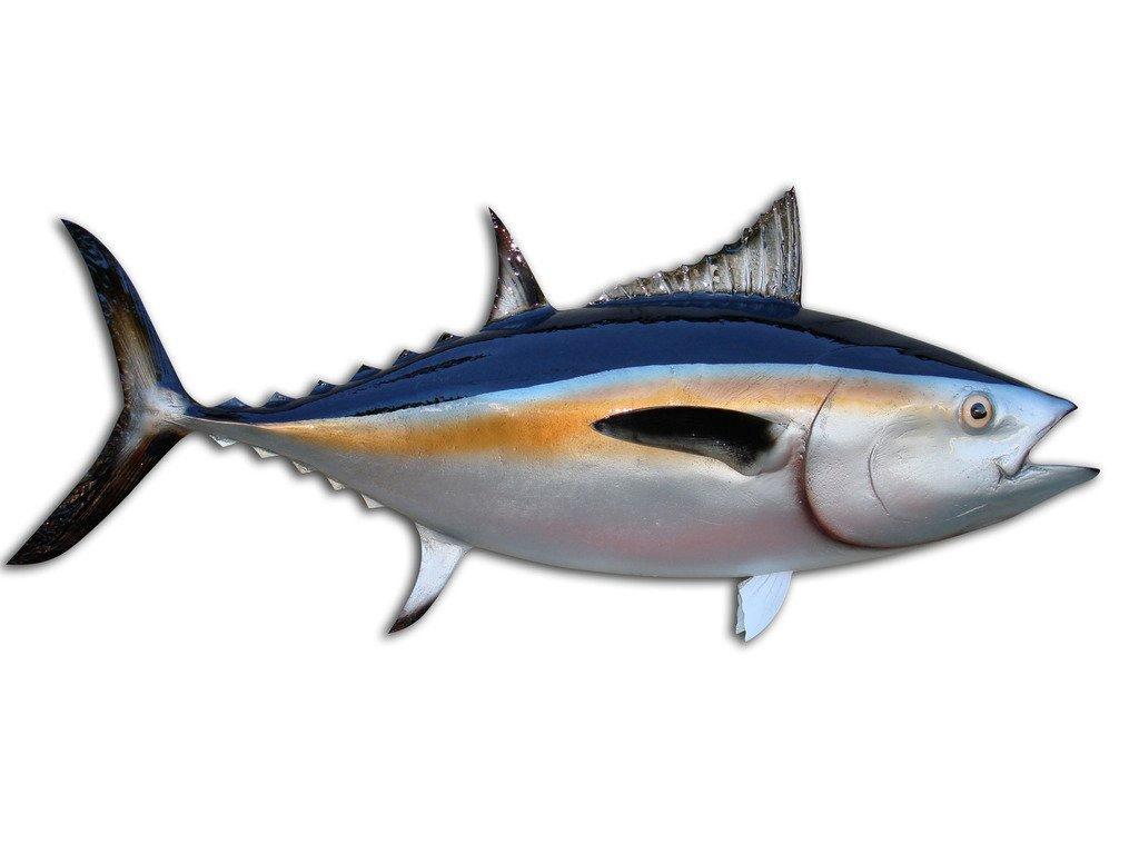 35'' Blackfin Tuna Half Mount Fish Replica, Fishing Wall & Coastal Decor