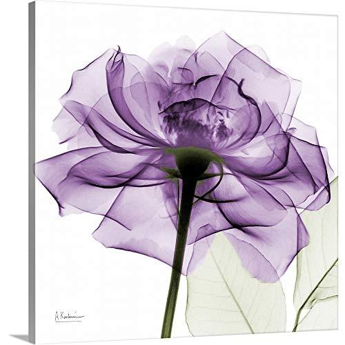 Purple Rose X-Ray Photograph Canvas Wall Art Print, 16