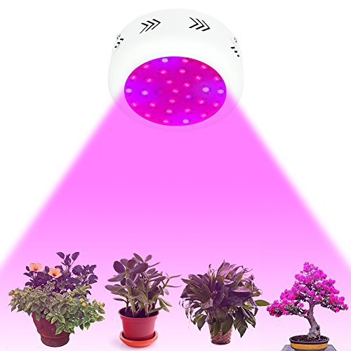 buy for lights many here performance passion unrealistic grow plant or of the years cheap best sale chips are led click uk dutch to full claims light after inspirational spectrum double good