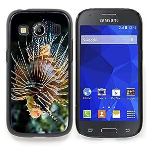 "Qstar Arte & diseño plástico duro Fundas Cover Cubre Hard Case Cover para Samsung Galaxy Ace Style LTE/ G357 (Majestic Fish Coral"")"