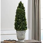 Boxwood-Cone-Topiary