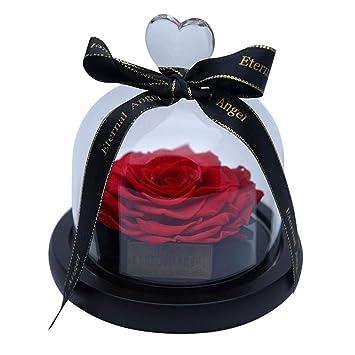 Amazon.com: ZHD Eternal Flower con cubierta de cristal y ...