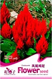 New Celosia Argentea Red Plumed Cockscomb Annual Bonsai Flower Seeds, Original Pack, 50+ Seeds / Pack, Silver Cock's Comb A067