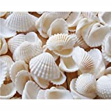 BST Wedding Reception Wedding Decor Beach Themed Seashell Shower Table Decorations (Pack of 90)