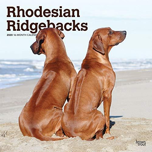 Rhodesian Ridgebacks 2020 12 x 12 Inch Monthly Square Wall Calendar, Animals Dog Breeds