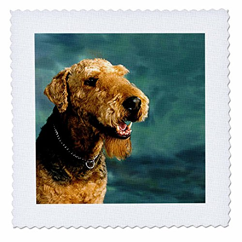 Dogs Airedale - Airedale Terrier - 10x10 inch quilt square - 1 Terrier Fabric
