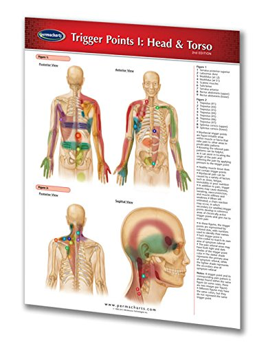 Trigger Points I: Head & Torso - Relexology Quick Reference Guide by Permacharts ()