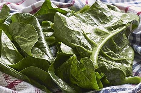 Details about  /Organic Malabar spinach seeds// asian vegetable// hạt giống rau mồng tơi Nhật