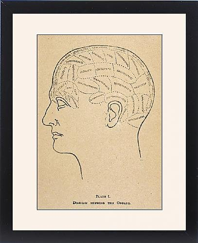 Framed Print Of Phrenological Head/b/w by Prints Prints Prints