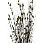 Green-Floral-Crafts-Preserved-Dried-Flowers-Dried-Grass