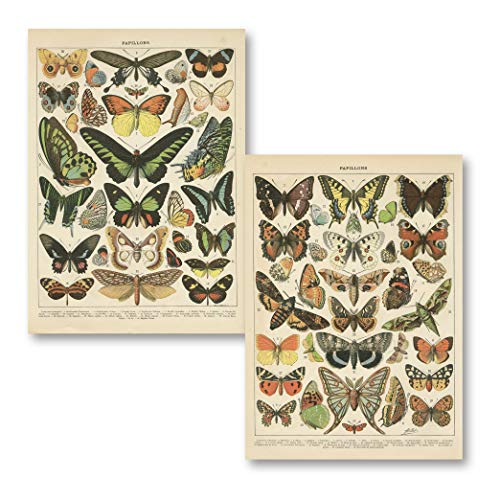 Butterfly Large Poster - Gango Home Décor Popular Vintage French Types of Papillons Butterflies Set; Two 11x14in Paper Print Posters