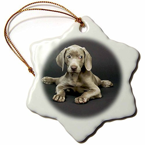 pansy 3-Inch Porcelain Snowflake Decorative Hanging Ornament, Weimaraner Puppy