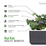 Click and Grow Smart Garden Red Kale Plant