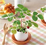 CARDEON Cute Lucky Egg Shaped Potted Plants Home Garden Plant Desktop Bonsai Decor