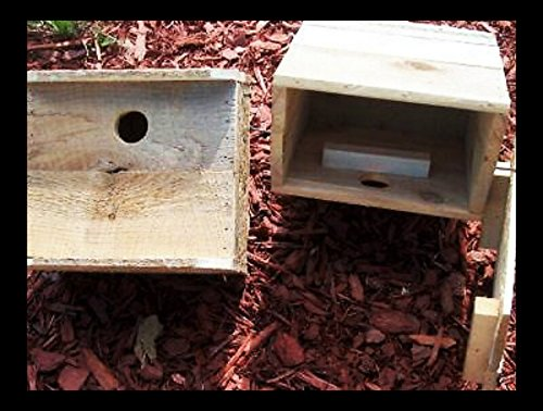 Holley Flying Squirrel House.1 unit FLYING SQUIRREL FAST 2 nd WORK DAY SHIPPING.BUILT BY U.S.A. VETS AND U.S.A. RAW MATERIALS.Nesting material,instructions included plus one on one help via phone by Holley (Image #2)