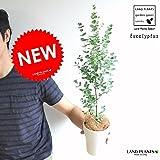 LAND PLANTS ユーカリ・グニー 4号サイズ 苗から育てよう 4号サイズ