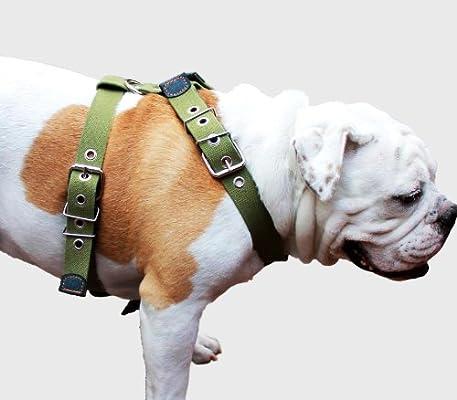 Algodón Web Arnés del perro XLarge. Fits cincha correas de 35
