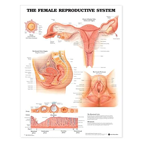 Female Body Parts Amazon