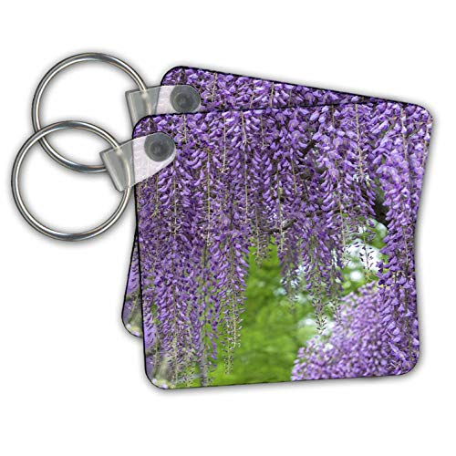 (3dRose Danita Delimont - Gardens - Japanese Wisteria. - set of 4 Key Chains (kc_314999_2))
