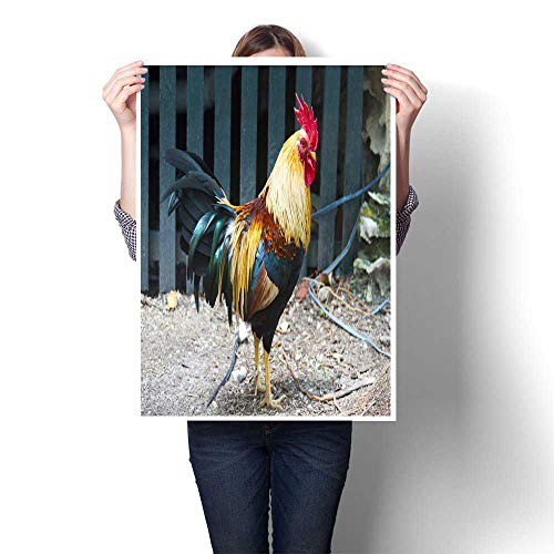 Home Decor Wild Rooster in Key West Decorative Fine Art Canvas Print Poster K 32