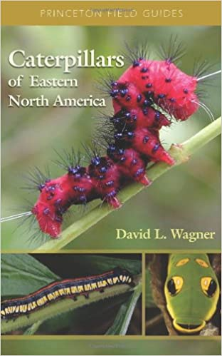 Amazoncom Caterpillars Of Eastern North America A Guide To