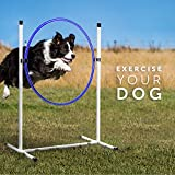 Better Sporting Dogs Complete Starter Agility Set