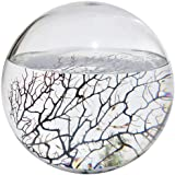 EcoSphere Closed Aquatic Ecosystem, X-Large Sphere
