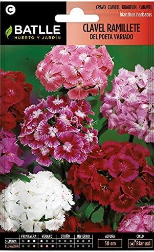 Semillas de Flores - Clavel Ramillete del Poeta Doble variado - Batlle