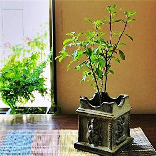 Image result for plant,nari
