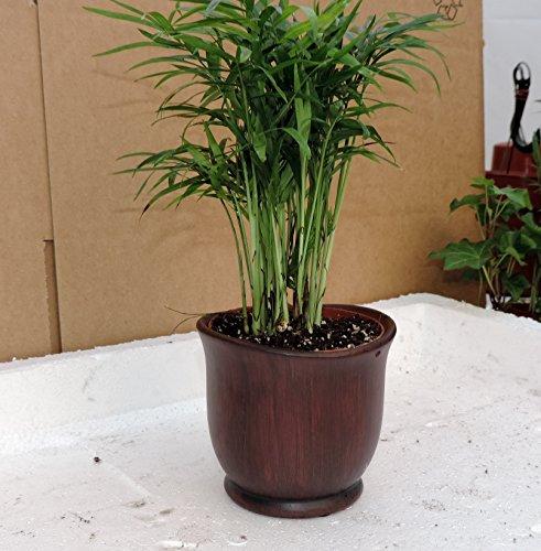 Red Bamboo Pot - 8