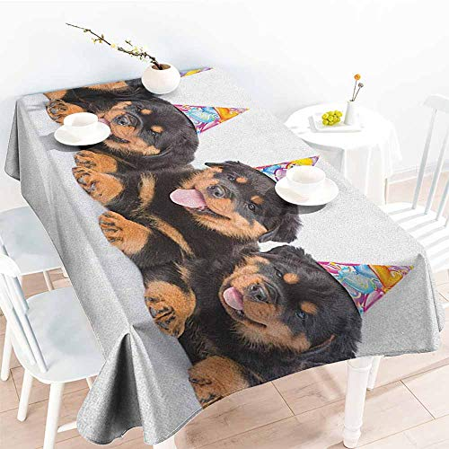 (Kids Birthday,Modern Waterproof Table Clothes Rottweiler Puppies with Party Cone Hats Cute Puppies Dogs Art Print 54