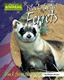 Black-footed Ferrets: Back from the Brink (America's Animal Comebacks)