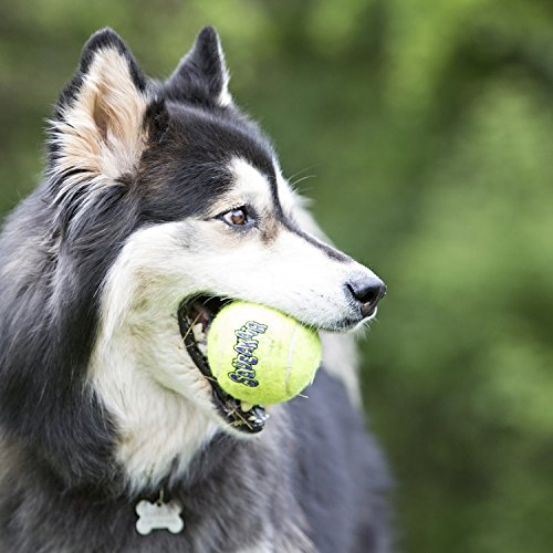 KONG Air Dog Squeakair Dog Toy Tennis Balls, Medium, 3-Pack