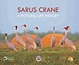 Sarus Crane: A Pictorial Life History