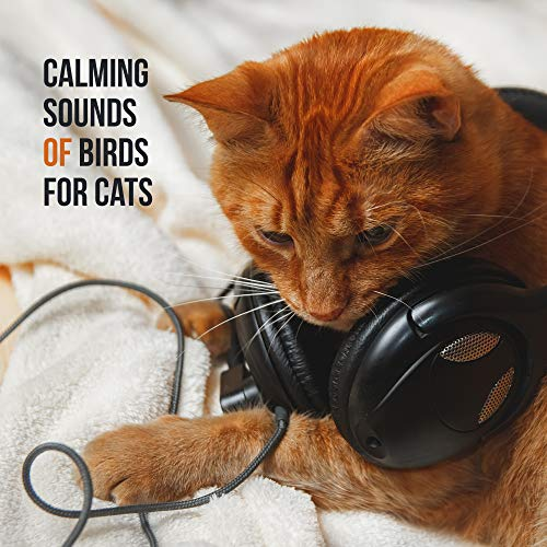 Calming Sounds of Birds for Cats - 15 Relaxing Sounds for Pets, Music for Cats, Deep Harmony, Nature Sounds, Relax & Sleep, Calm Down