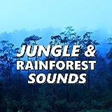 Pleasant Jungle & Rainforest Sounds