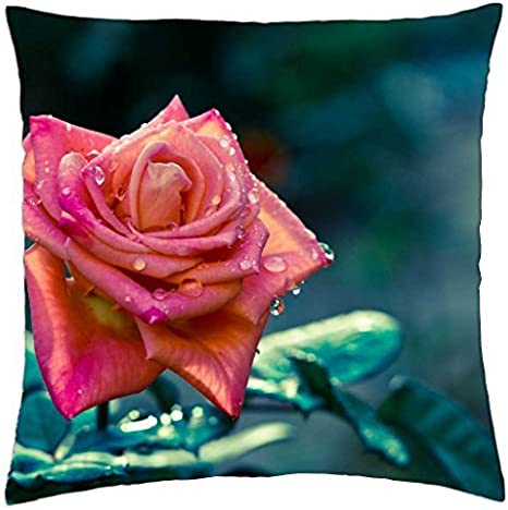 Dew Drops On Rose Petals Throw Pillow Cover Case 18 Amazon Ca Home Kitchen