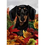 Best of Breed Fall Leaves Garden Size Flag Black and Tan Dachshund Review