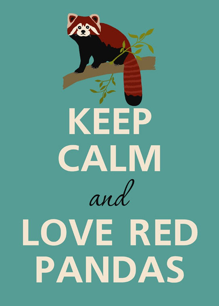 Rectangle Refrigerator Magnet Keep Calm and Love Red Pandas