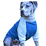 Tooth & Honey Dog Sweater/Pitbull/Bully Breed/Colorblock Sweatshirt/Pullover/Teal/Grey (Medium)