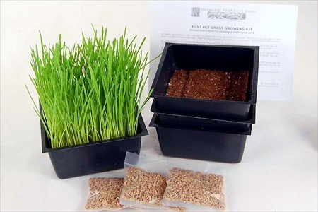 mini-organic-pet-grass-kit-3-pack-grow-wheatgrass-for-pets-dog-cat-bird-rabbit-more-includes-trays-s