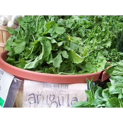 arugula, ROQUETTE, salad greens, 1465 SEEDS! : Garden & Outdoor