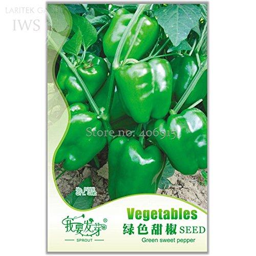 New Heirloom Organic Green Bell Sweet Pepper Seeds, Original Pack, 40+ seeds,