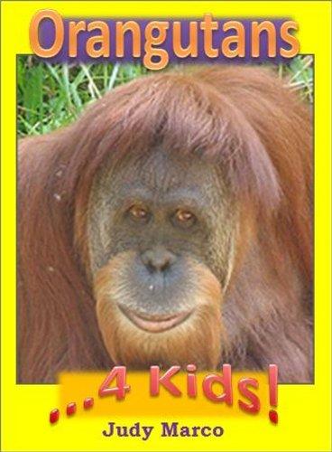 Where are the orangutans?