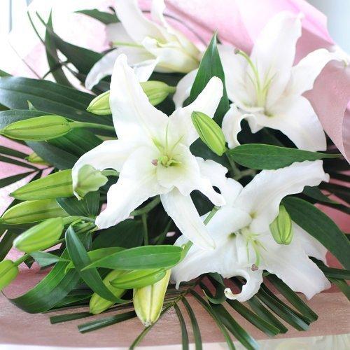 白ゆりの花束 花 百合 大輪系 お花の数 25輪以上 白ユリ B00R5I6MY8 25